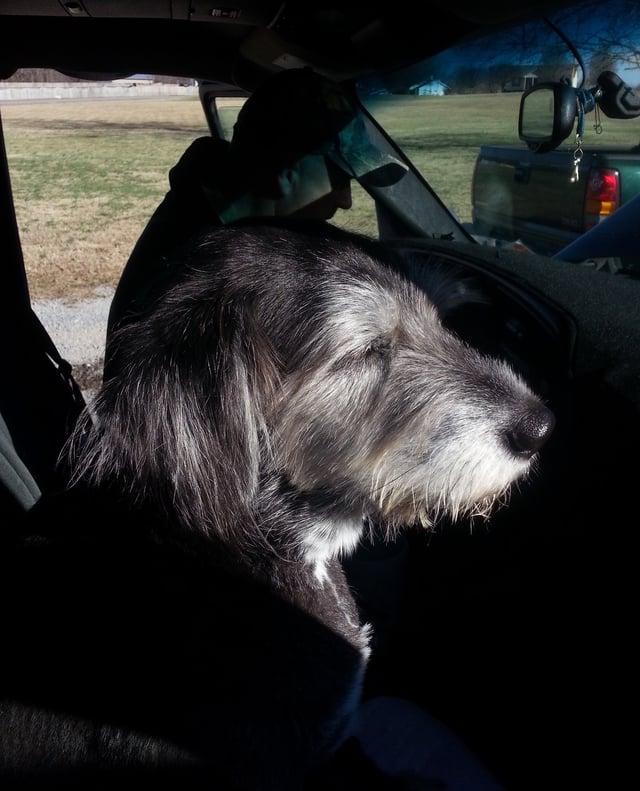 Dog Recovery Journey.jpeg